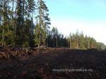 Осення покатушка около Семиозерье 2014г (32)