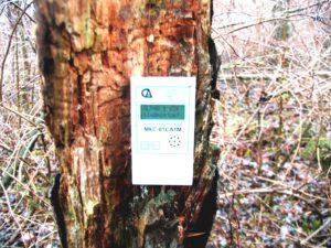 Показания дозиметра на трухлявой лесине. Credit: Виктор Терешкин